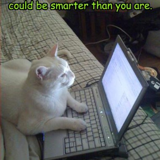 Your cat does SEO for YouTube
