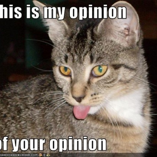 Cat hates your opinion of wanting to ban Amazon